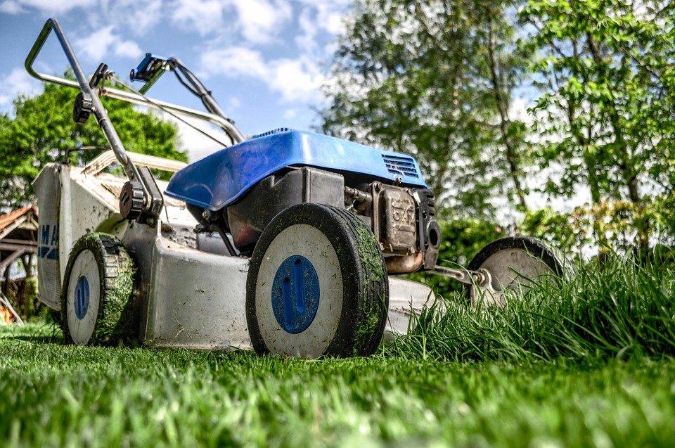 Nowy ogród w Twoim domu!